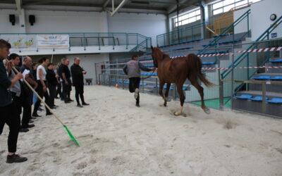 Winter Riding school at the Bjelovar Fair